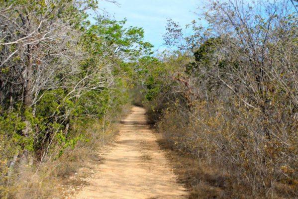 El Bosque Seco de Guánica